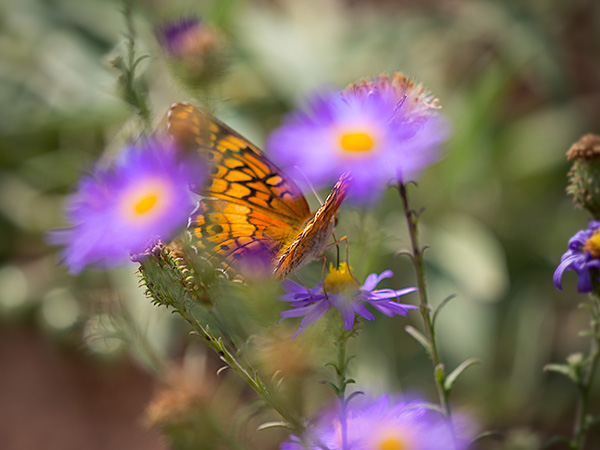 butterfly image in flowers