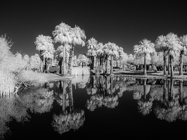 infrared photo palms and water