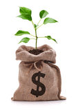 investing, saving
