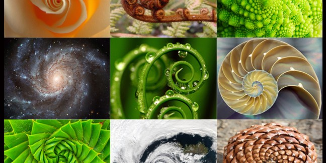 spirals in nature