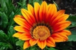 flower-4358760_640