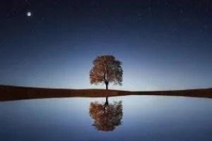 tree-838667_640