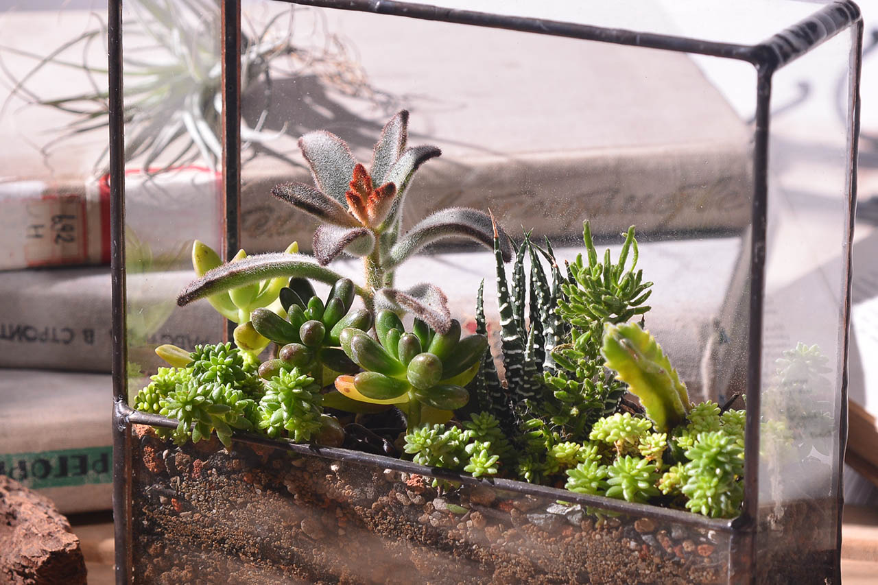 小小生態圈的玻璃組盆