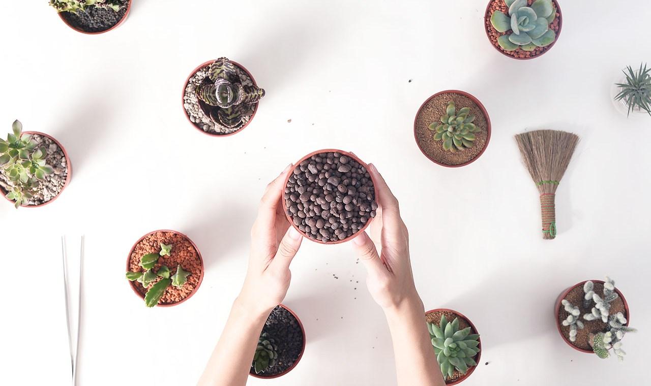 發泡煉石與多肉植物專用土