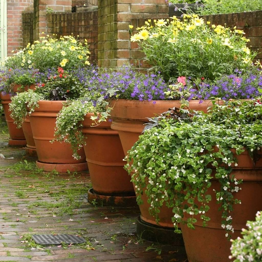 Macetas de barro ventajas y desventajas succulent avenue for Plantas en macetas