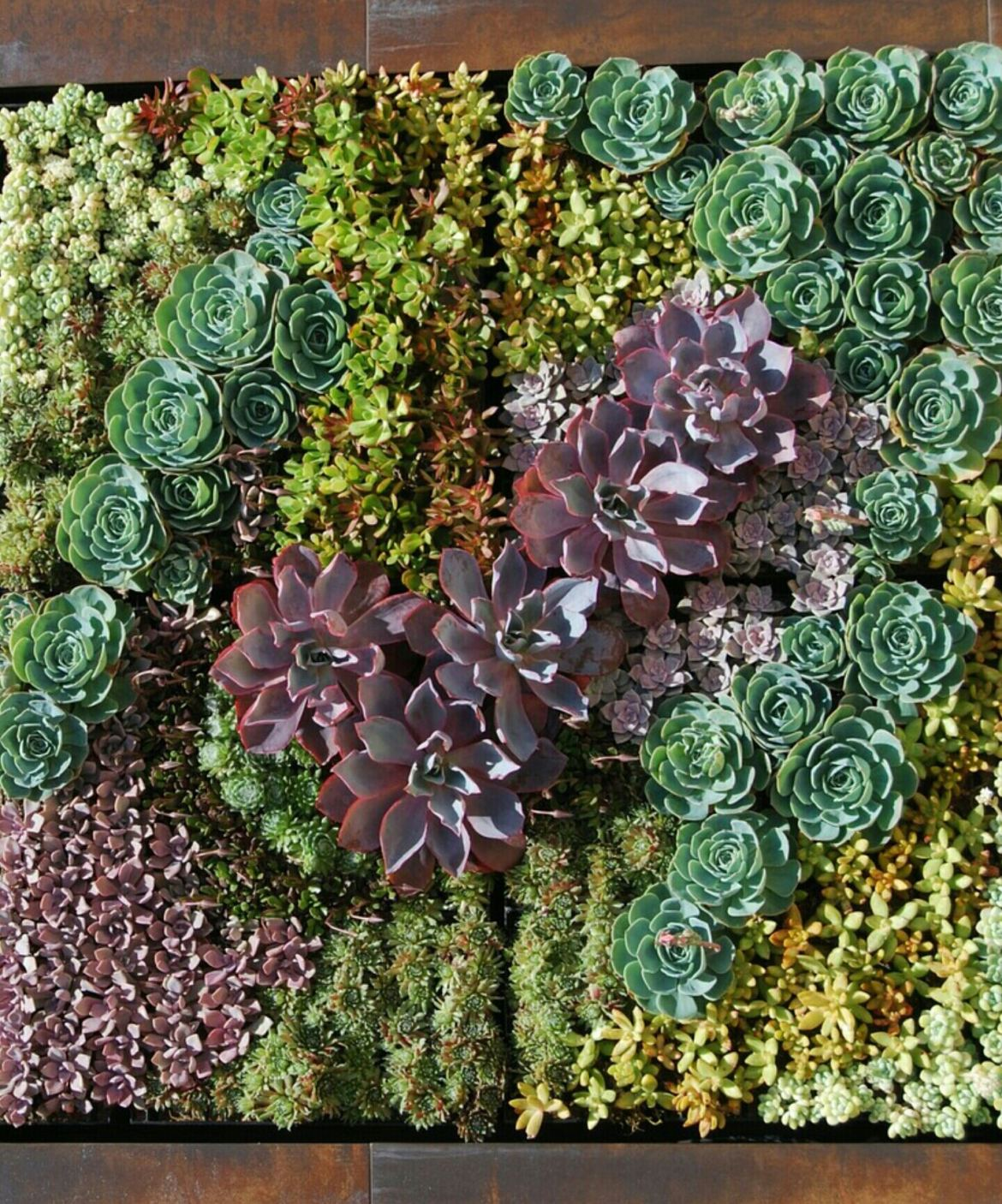 Paredes de suculentas como obras de arte succulent avenue for Pinterest obras de arte