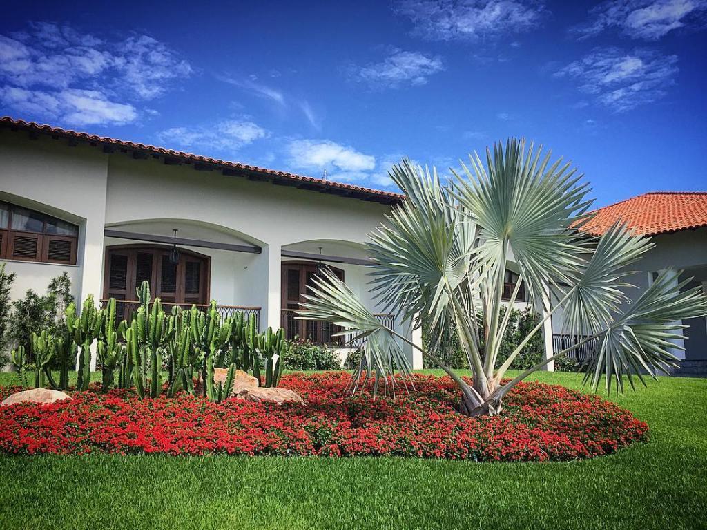Palma bismarckia - Cuidados y usos