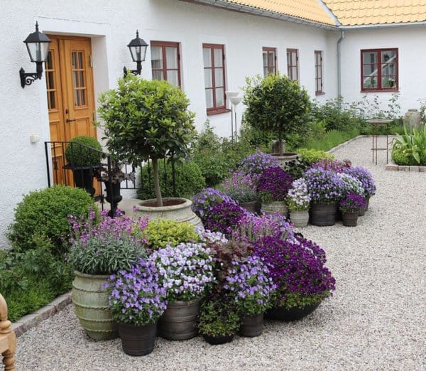 Tipos de plantas ornamentales succulent avenue for Origen de las plantas ornamentales