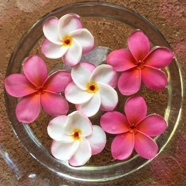 Cómo preservar la flor de frangipani con agua fría