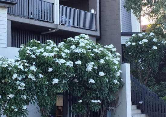 Fotos de planta ramo de novia