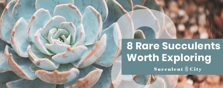 8 Rare Succulents Worth Exploring