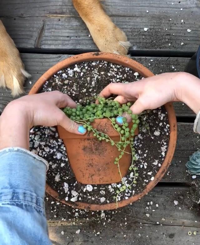 Succulent pot instagram trend