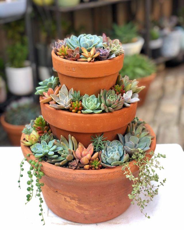 Succulents vs cacti