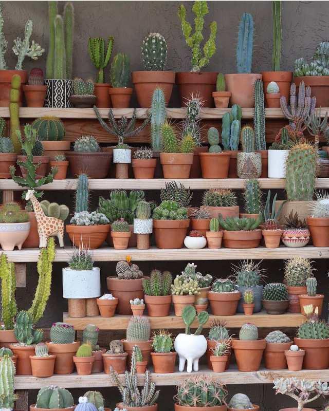 Succulents vs cacti article succulent city