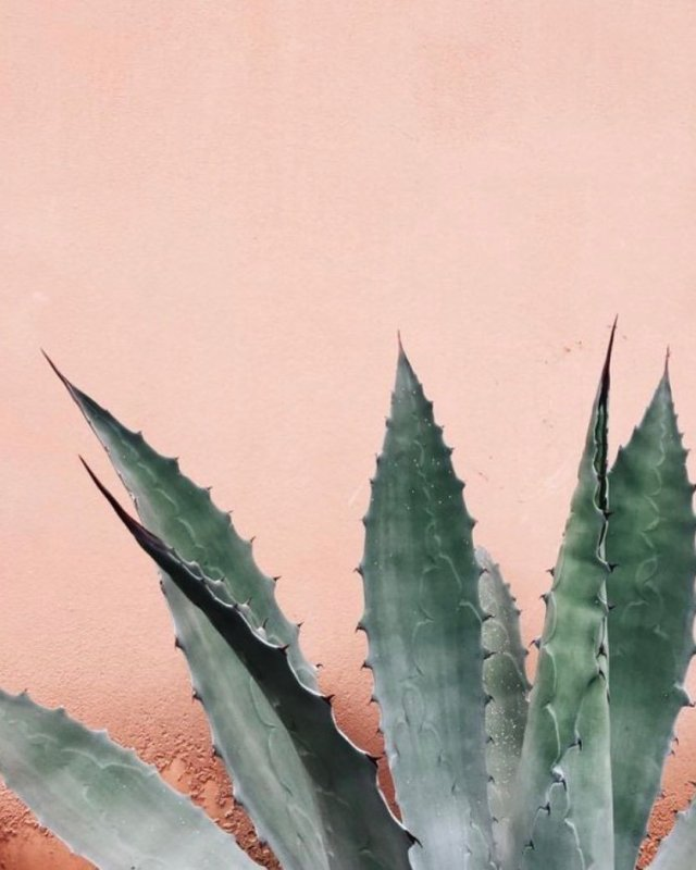 how aloe vera helps eczema