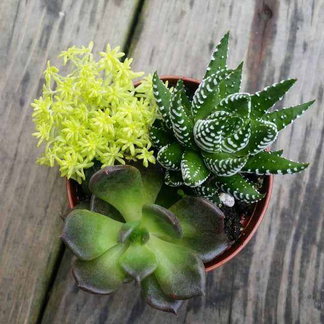 can succulents survive at work