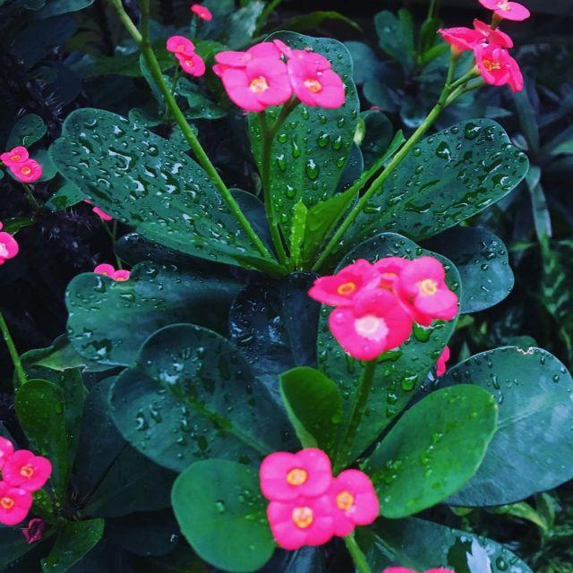 8 popular African succulents