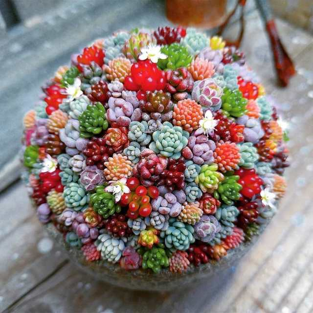 Succulents With Yellow Flowers