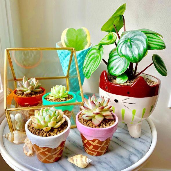10 Cute Mini Succulents for Indoors