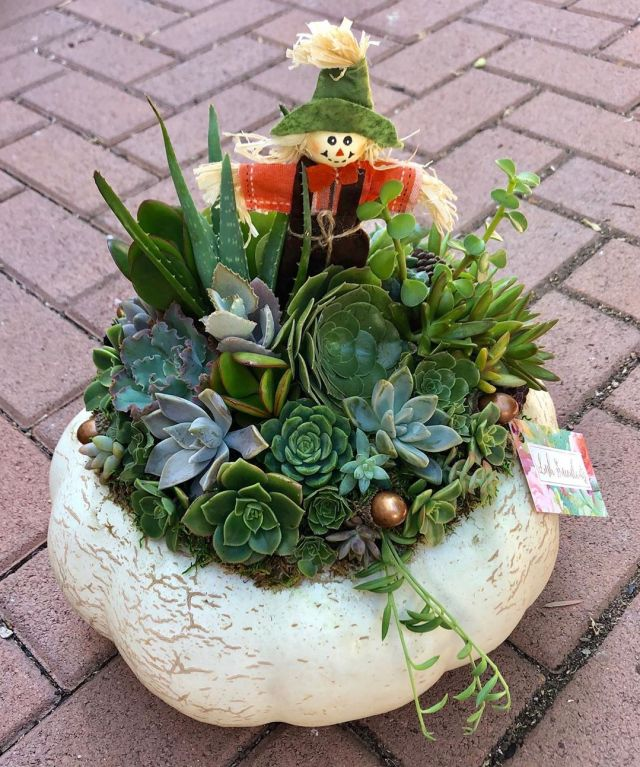 Overwatered Succulent Remedies