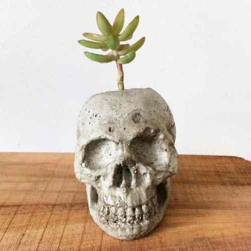 Concrete Skull Planter | Succulent City