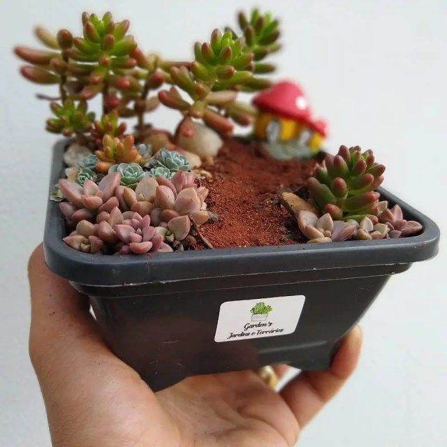 Large VS Small Succulents Which Ones are For You