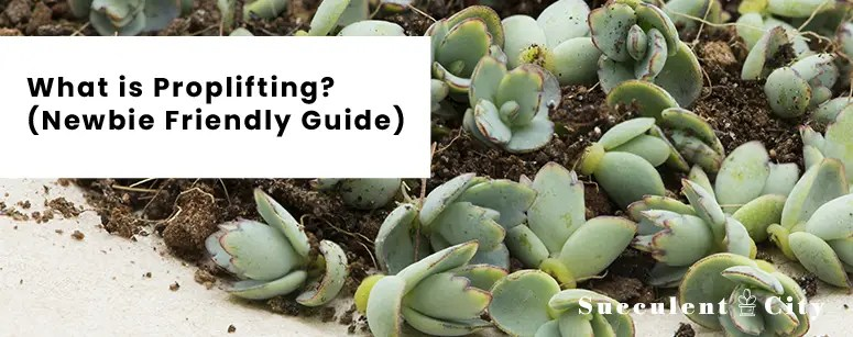 What is Proplifting - Newbie Friendly Guide