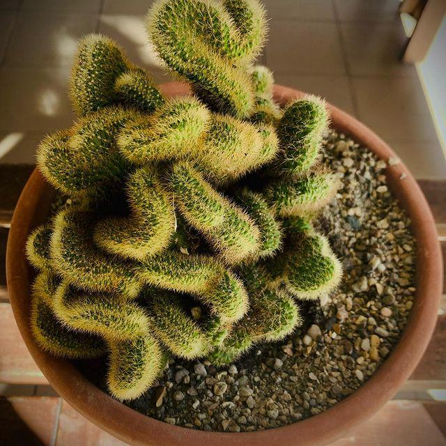 Brain Cactus-What is Brain Cactus-SC