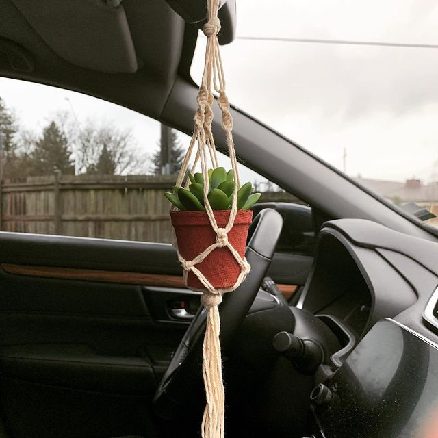 Plant Car-Considerations before having a plant in your car-SC