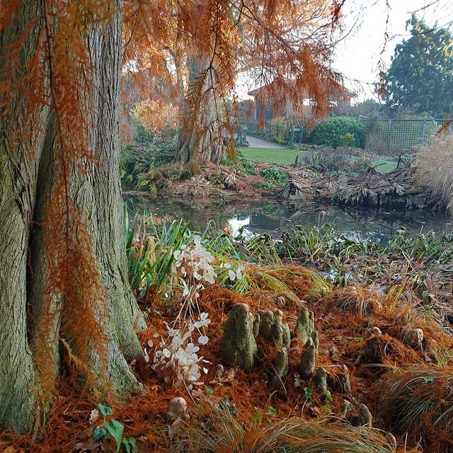 Aerial Roots-Other types of root-Pneumatophores-SC
