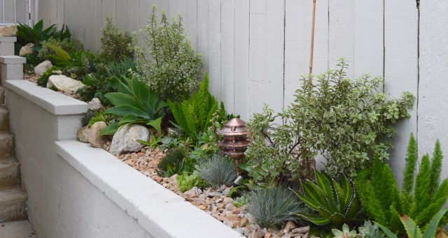 From the Succulent Designs by Mary Test Garden