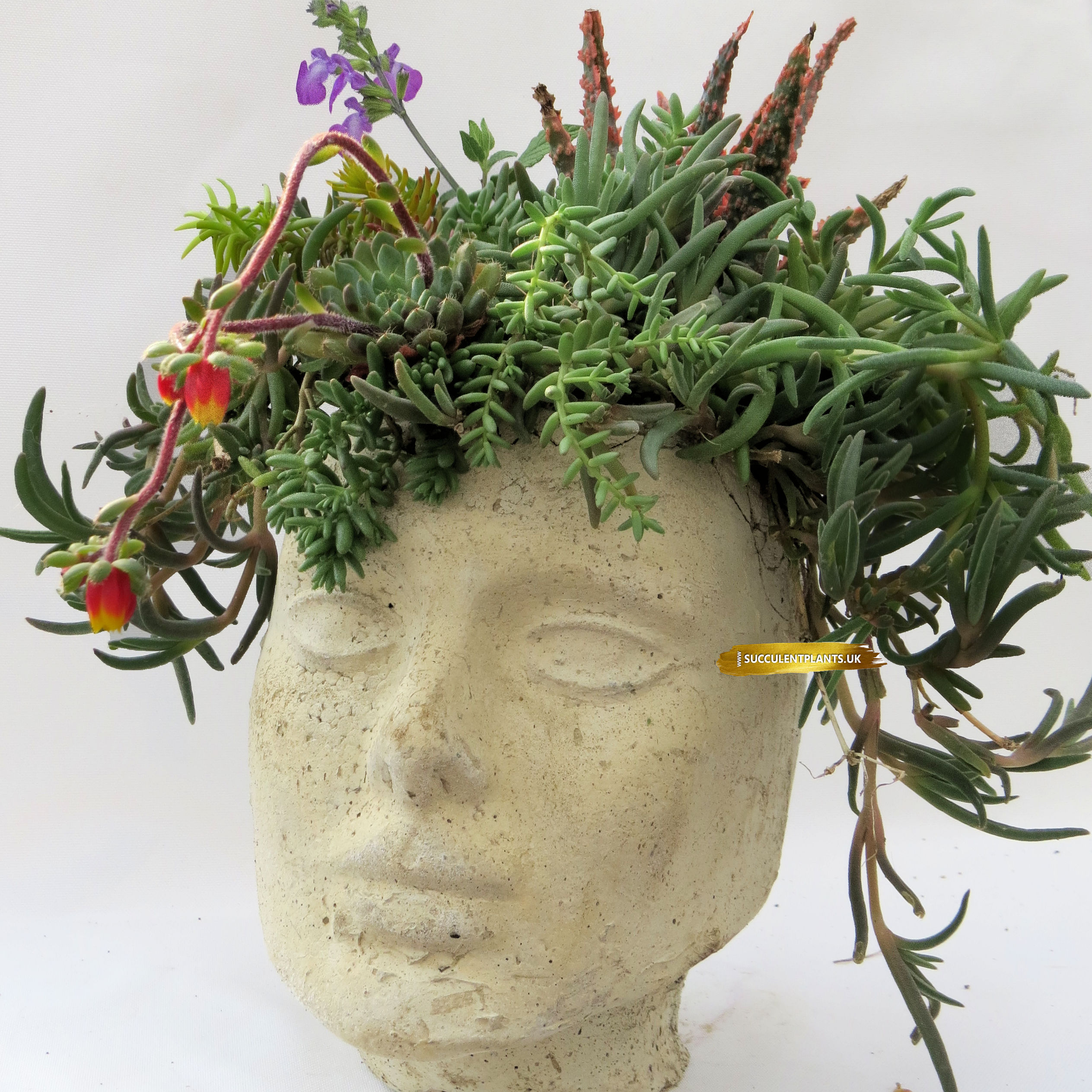 Large Concrete Head Planter