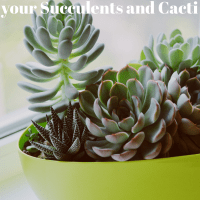7 Tips to Stop Overwatering and Killing your Succulents and Cacti
