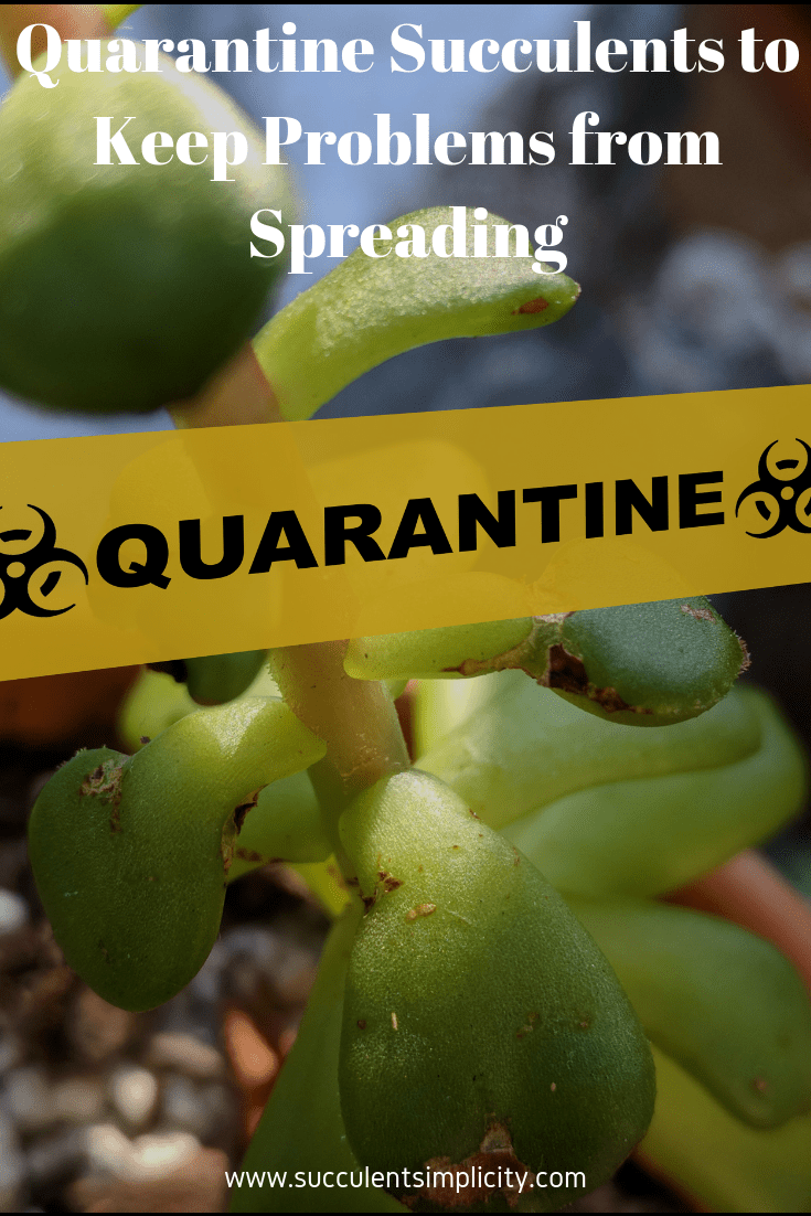 Quarantine Succulents to Keep Problems from Spreading
