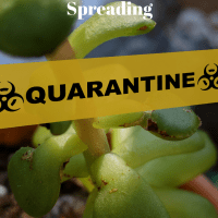Quarantine succulents to keep problems from spreading.