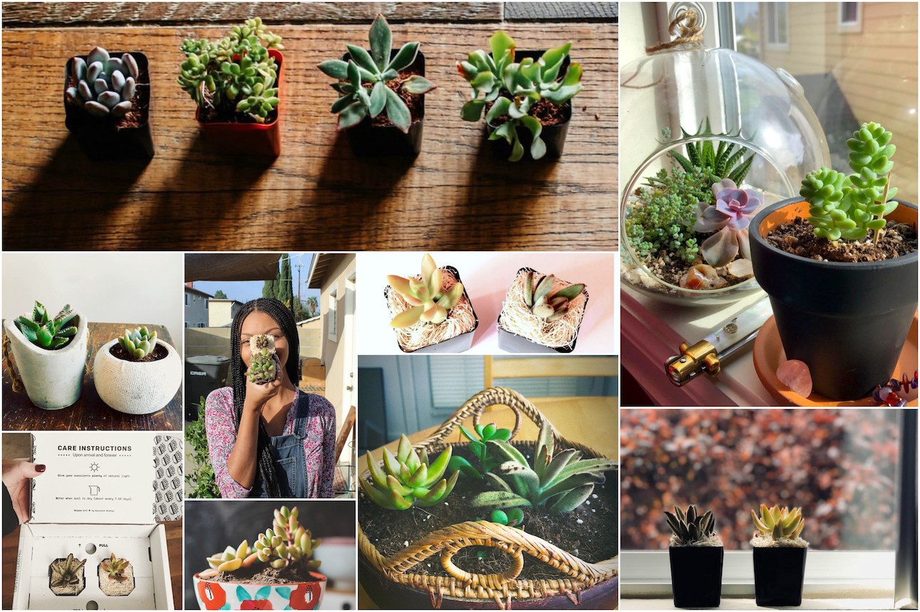 7 Convincing Arguments for Why You Need Succulent Studios