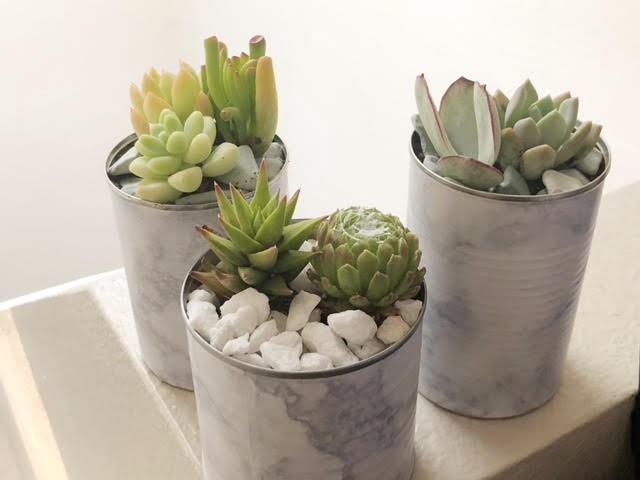 Marble Succulent Pot DIY