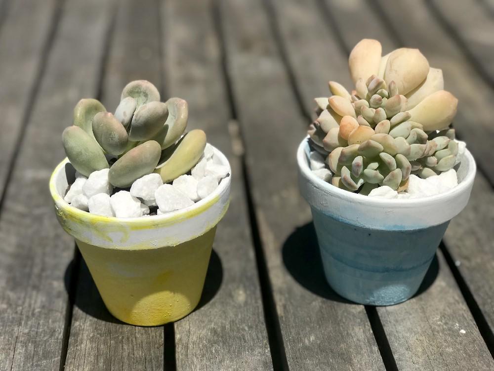 Ombré  Succulent Pot DIY