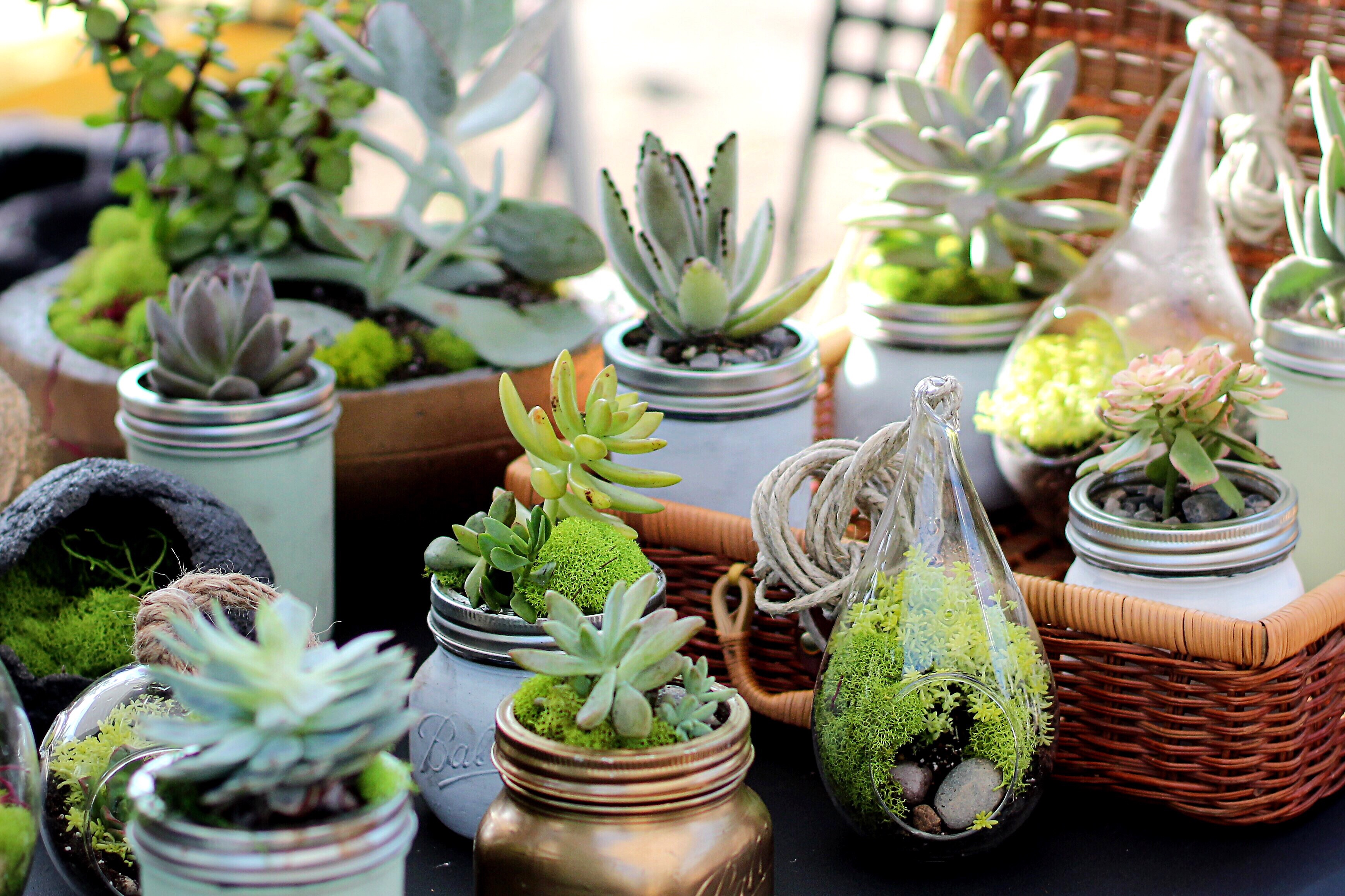 Succulents 101: A Handy Guide for Beginners