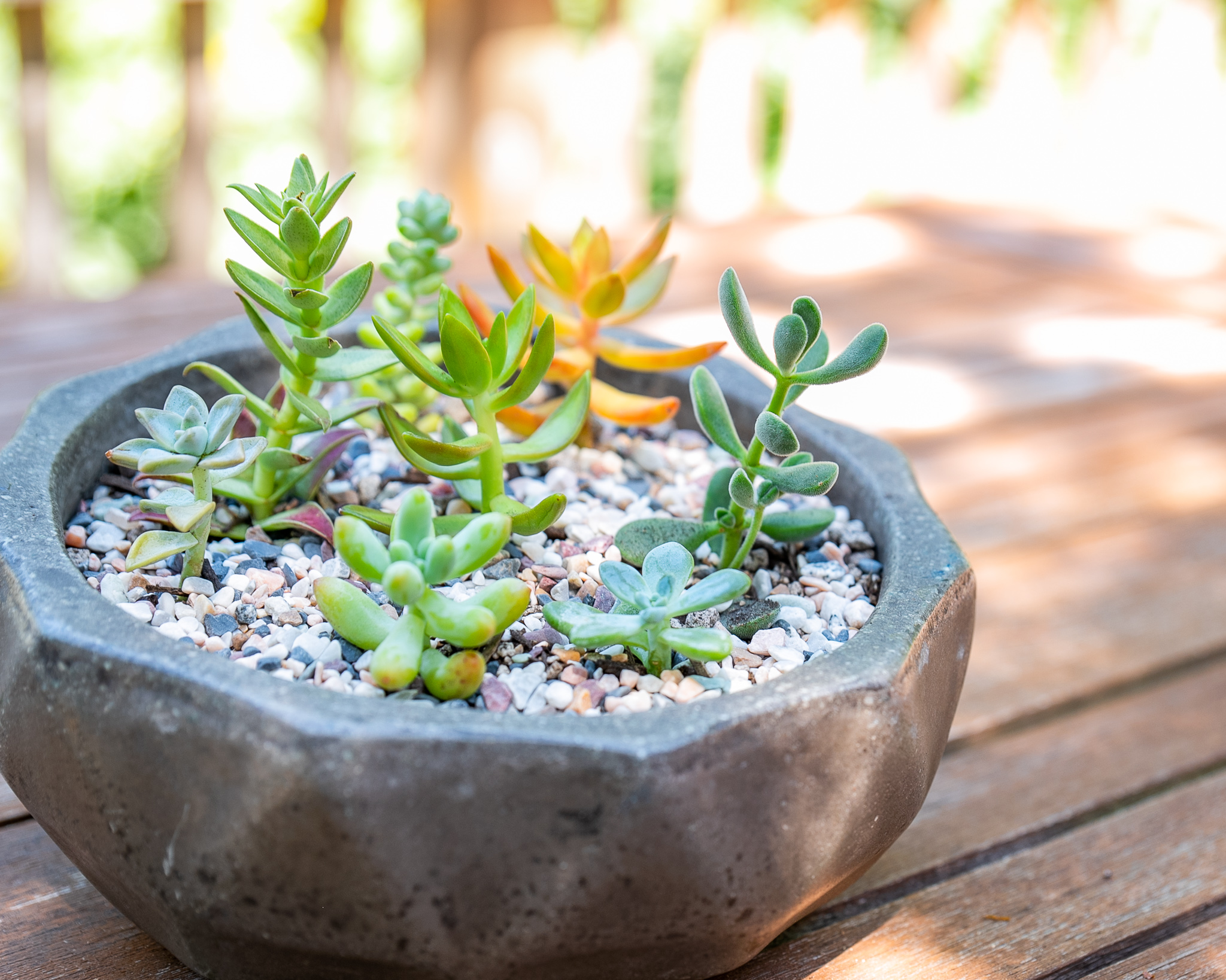How to Master Group Potting and Succulent Arrangements
