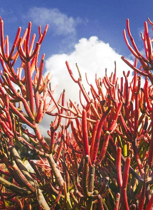 Hot, Hot, Heat! Caring for Succulents in Hot Climates