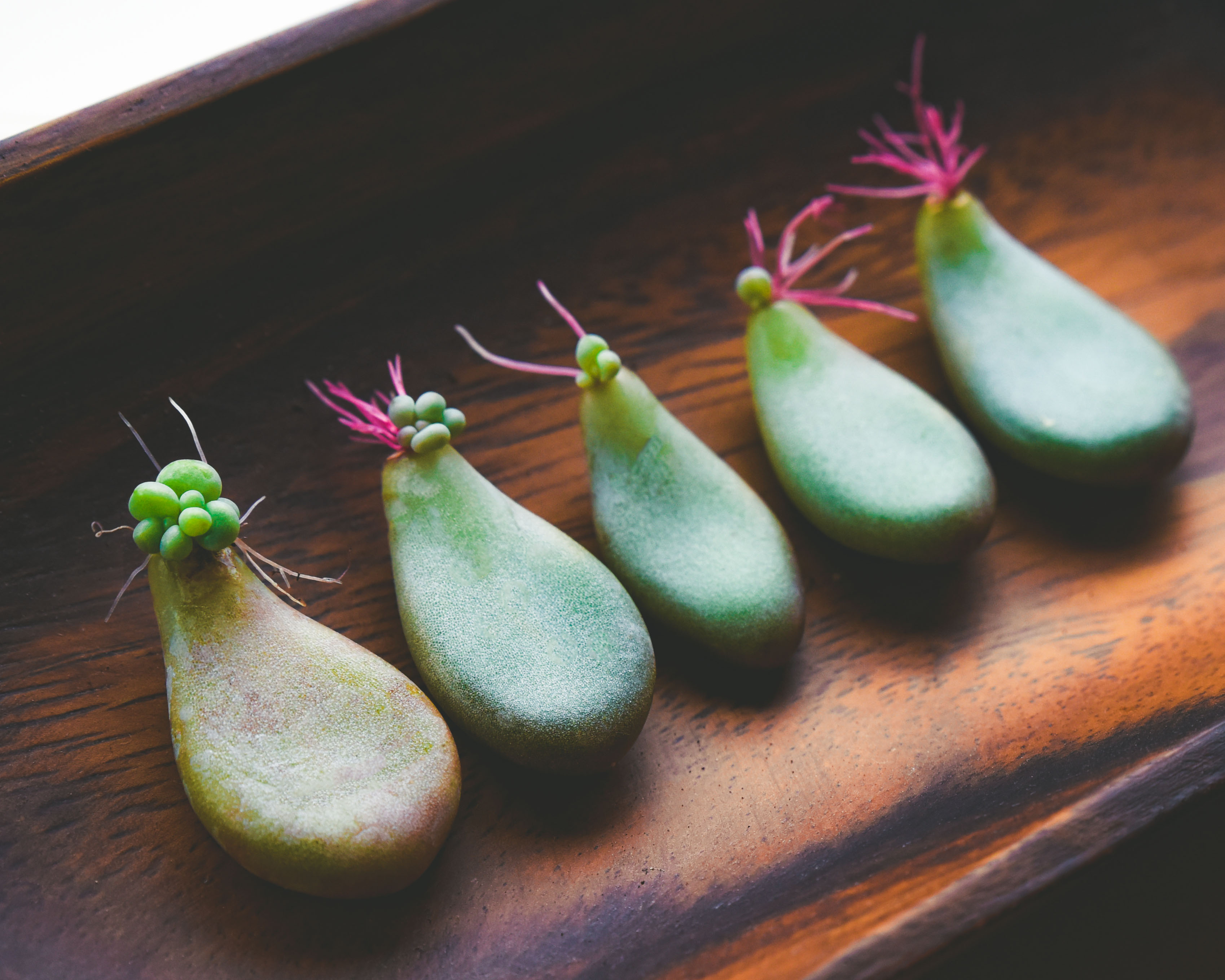 Step-by-Step Succulent Propagation Guide
