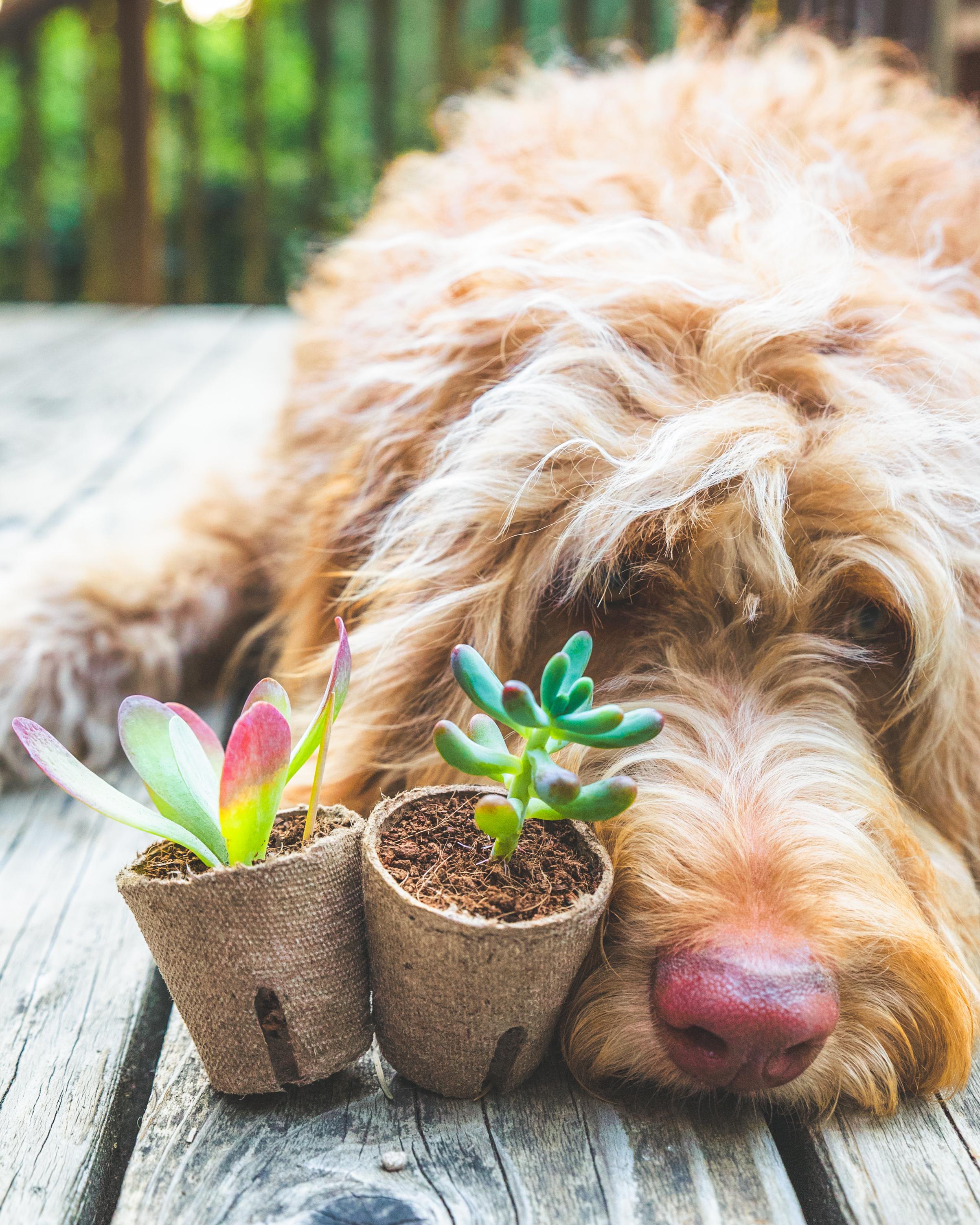 Are Succulents Pet Friendly?