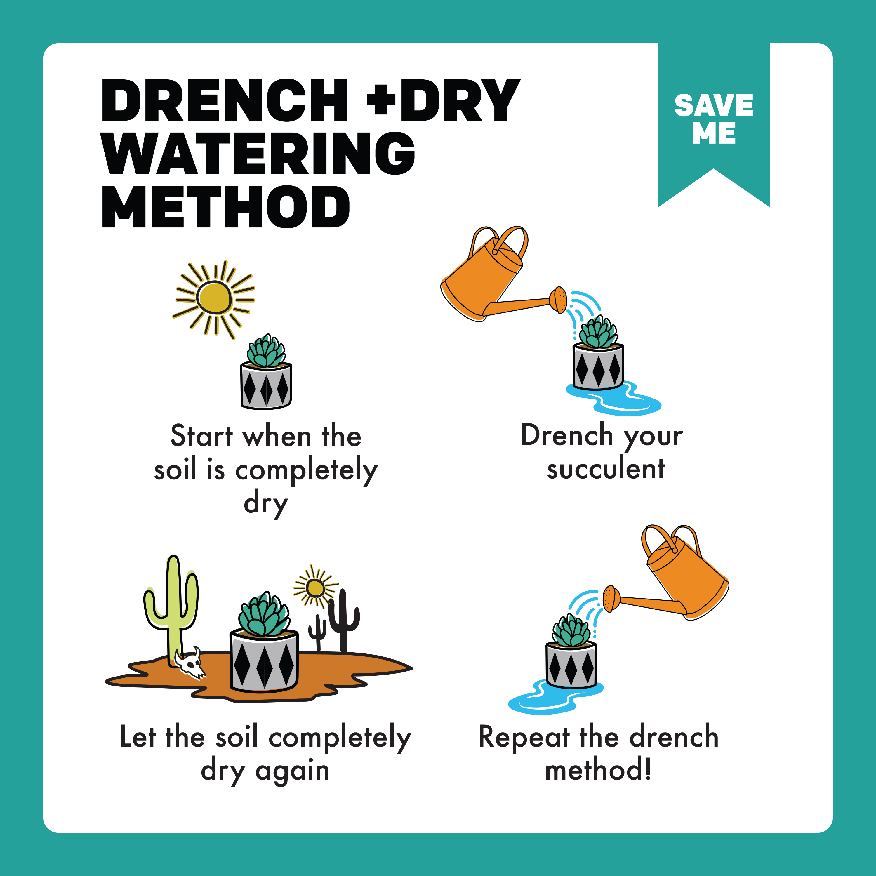 Drench + Dry Succulent Watering Method