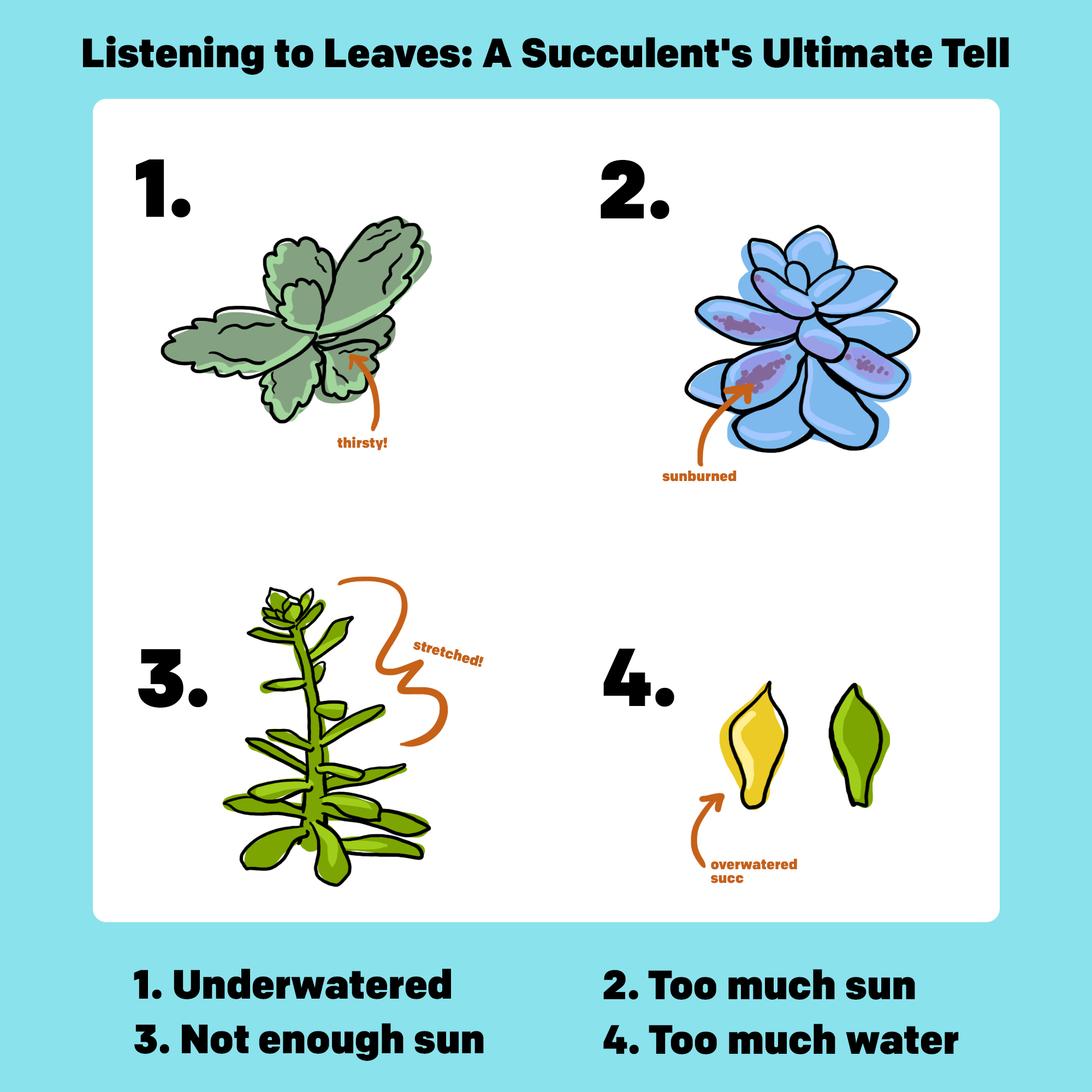 Listening to Leaves: A Succulent's Ultimate Tell