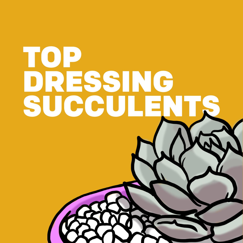 Top Dressing Succulents