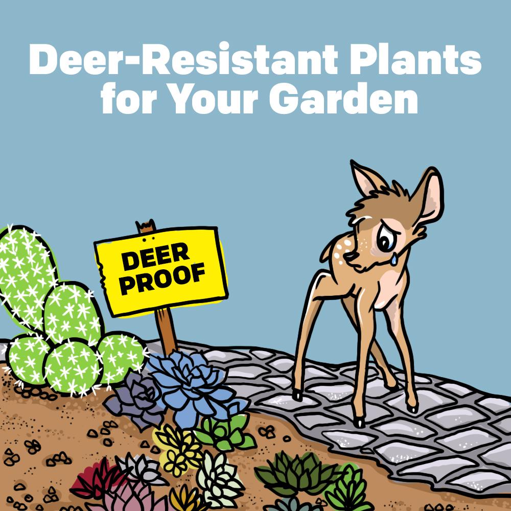 Deer-Resistant Plants for Your Garden