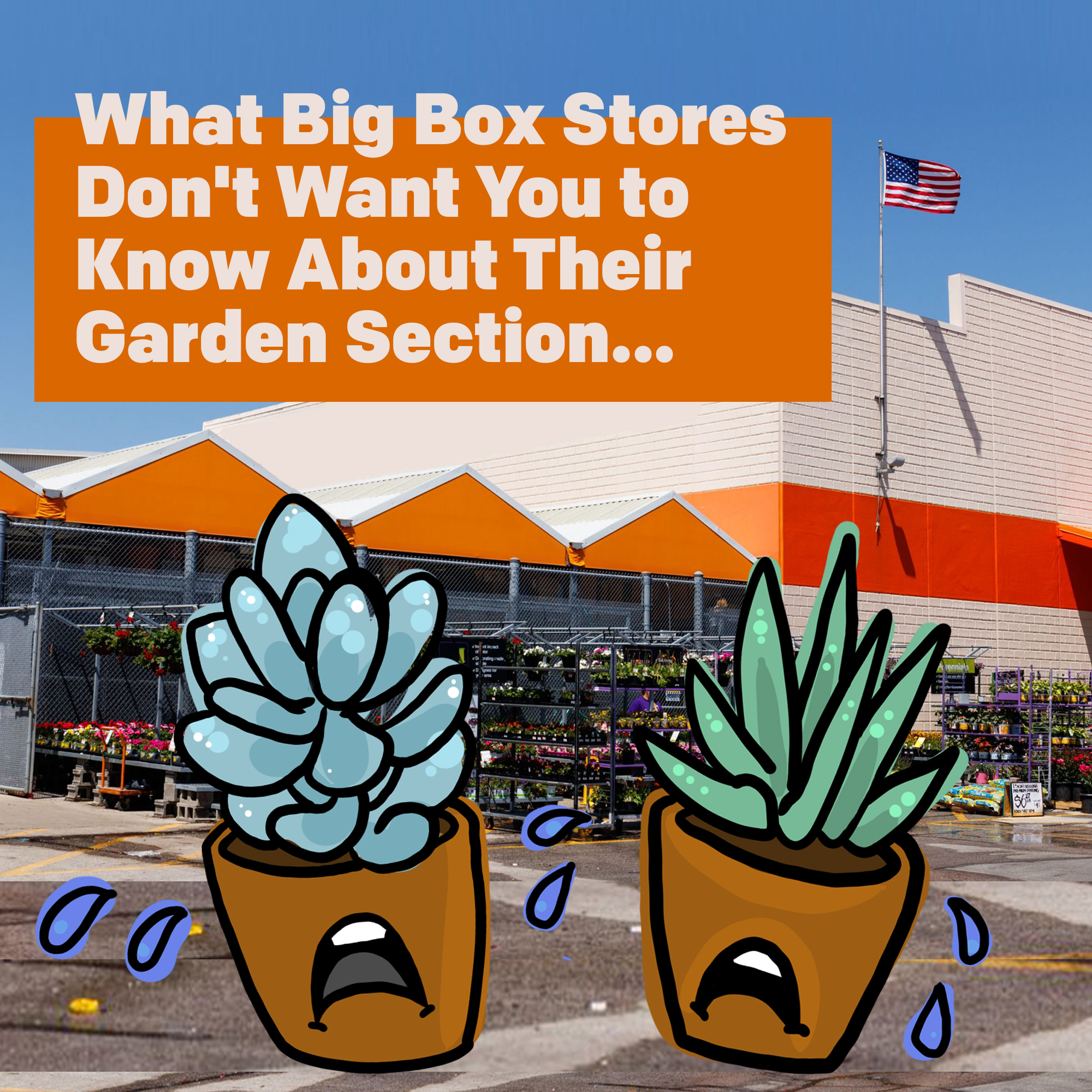 Skip the Box Store: Buy Succs Ethically