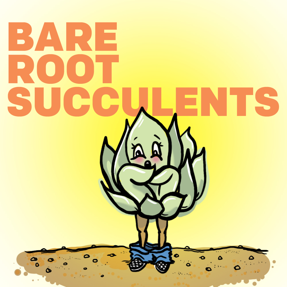 Bare Root Succulents