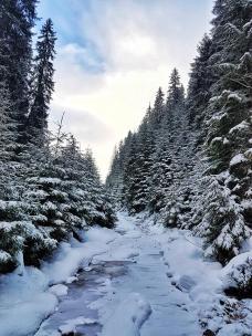 muntii-rodnei-1-decembrie-2016-5
